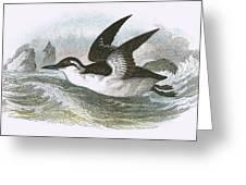 Common Guillemot Greeting Card