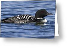 Common Loon 106 Greeting Card