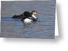 Common Loon 111 Greeting Card