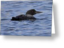 Common Loon 126 Greeting Card