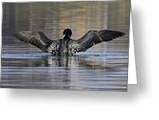 Common Loon 142 Greeting Card