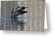 Common Loon 144 Greeting Card