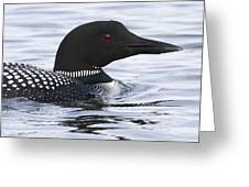 Common Loon 188 Greeting Card