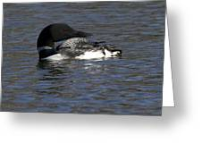 Common Loon 39 Greeting Card