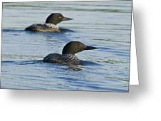 Common Loon 6 Greeting Card