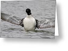 Common Loon 65 Greeting Card