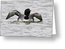 Common Loon 66 Greeting Card