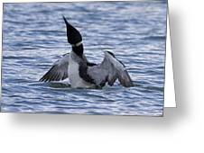 Common Loon 69 Greeting Card