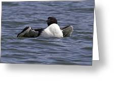 Common Loon 73 Greeting Card