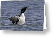 Common Loon 74 Greeting Card