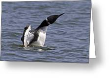 Common Loon 75 Greeting Card