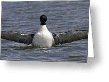 Common Loon 78 Greeting Card
