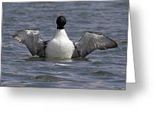 Common Loon 79 Greeting Card