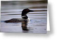 Common Loon 8 Greeting Card