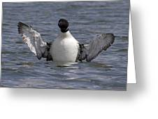 Common Loon 80 Greeting Card