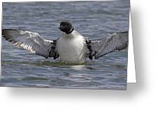 Common Loon 82 Greeting Card