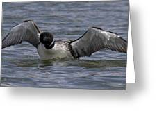 Common Loon 84 Greeting Card