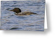 Common Loon 95 Greeting Card