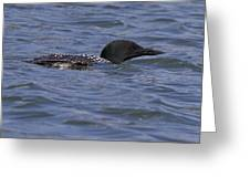 Common Loon 97 Greeting Card