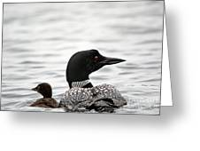Common Loon And Baby Greeting Card