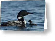 Common Loon Family Greeting Card
