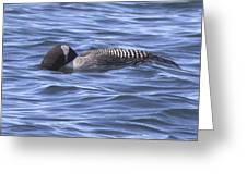 Common Loon Fishing Greeting Card