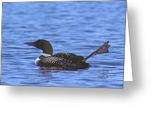 Common Loon Foot Wave Greeting Card