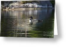 Common Loon On Northern Lake Greeting Card