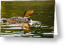 Common Loon Pictures 145 Greeting Card
