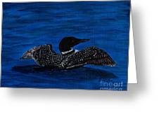 Common Loon Preening Greeting Card