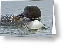 Common Loon With Food Greeting Card