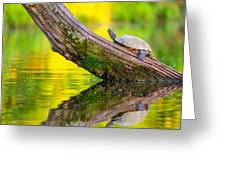 Common Map Turtle Greeting Card
