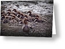 Common Merganser With Chicks Greeting Card