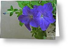 Common Morning Glory   #1313 Greeting Card