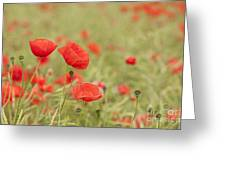 Common Poppies Greeting Card