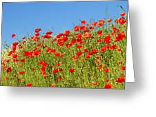 Common Poppy Flowers  Greeting Card