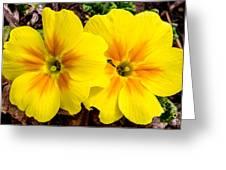 Common Primrose 1 Greeting Card