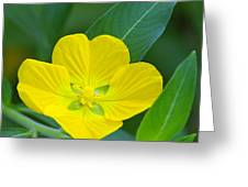 Common Primrose Willow 1 Greeting Card