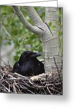 Common Raven Incubating Eggs In Nest Greeting Card