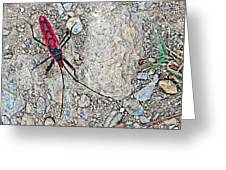 Common Red Bug Along The Seti River Road-nepal  Greeting Card by Ruth Hager