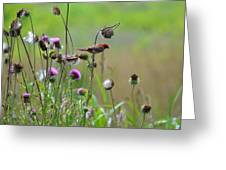 Common Redpoll In A Field Of Thistle Greeting Card