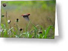 Common Redpoll In Flight Greeting Card