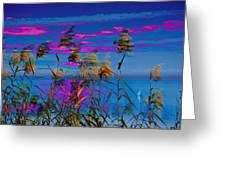 Common Reeds At Sunrise Greeting Card