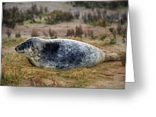 Common Seal Resting On The Beach Greeting Card