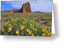 Common Sunflowers And  Temple Of The Sun Greeting Card by Tim Fitzharris