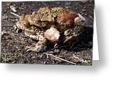 Common Toads Greeting Card
