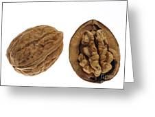 Common Walnut 7 Greeting Card