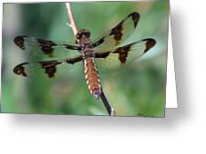 Common White-tail Dragonfly Greeting Card