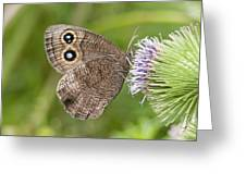 Common Wood-nymph On Thistle Greeting Card