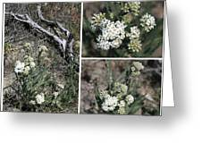 Common Yarrow Collage Greeting Card